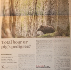 The Irish Times: Feature on wild boar in Hertitage & Habitat section (04 May 2013). A total boar or a pig's pedigree?