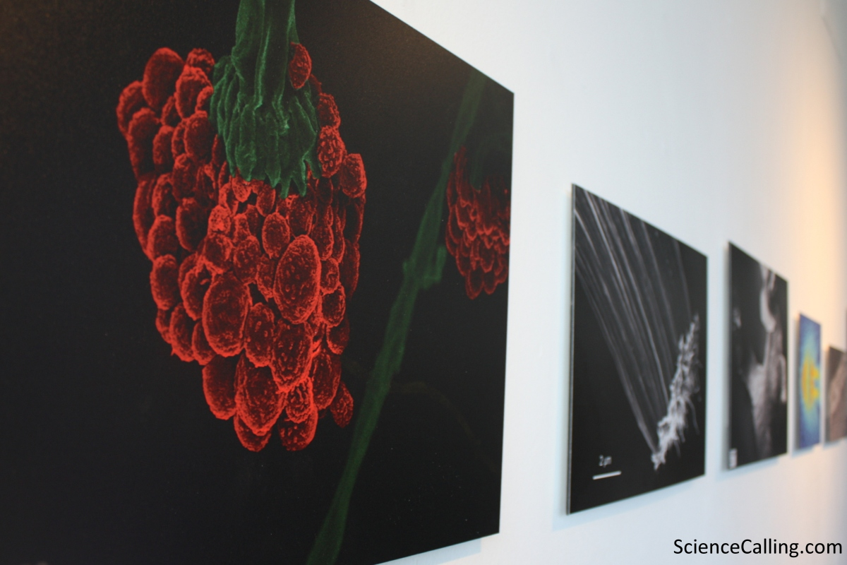 Photos on a nano-scale decorate the walls. These are a series of images captured by researchers in CRANN using a scanning electron microscope. Time to start a petition... sell some prints in the Science Gallery shop? (Please correct me if they are already available!)