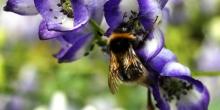 Curiosity Calling: Bees, Boyle & Antibiotics