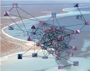 A visual representation of the complexity of social networks in the Monkey Mia dolphin population. Image produced with permission from 'Shark Bay Dolphin Project'